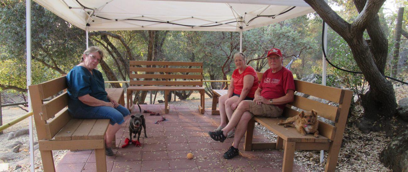 Socializing at the Bark Park