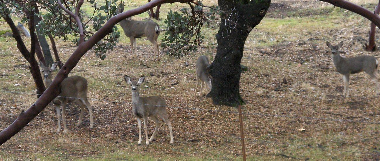 Deer roam freely here
