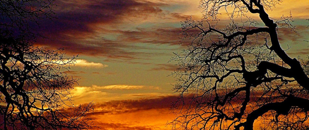 Sunset through Blue Oaks, SKP Park Sierra, Coarsegold, CA