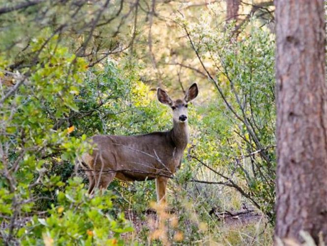 Often early or late in the day, deer can be seen moving silently through the park