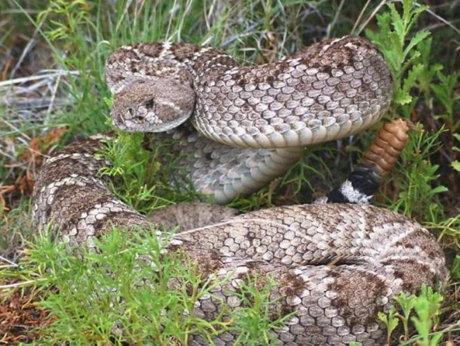 Visitors, members and their pets need to stay alert for rattlesnakes during the warmer months.